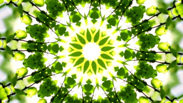 Beautiful kaleidoscopic circle pattern of green foliage. video