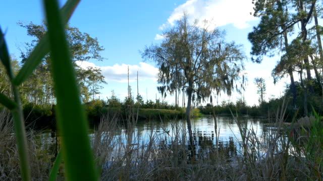 piękne jezioro omszony perzu i wysokie drzewa na bagnie banków - równina filmów i materiałów b-roll