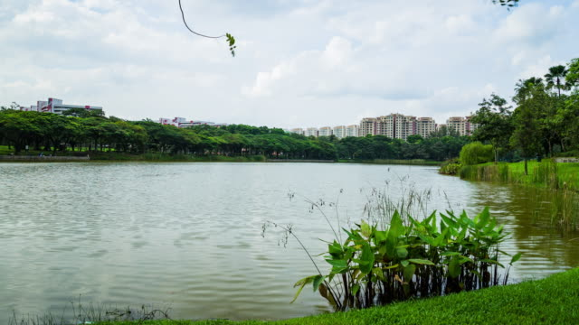 Beautiful lake view of Punggol Park in Singapore with blue sky and moving cloud time lapse video