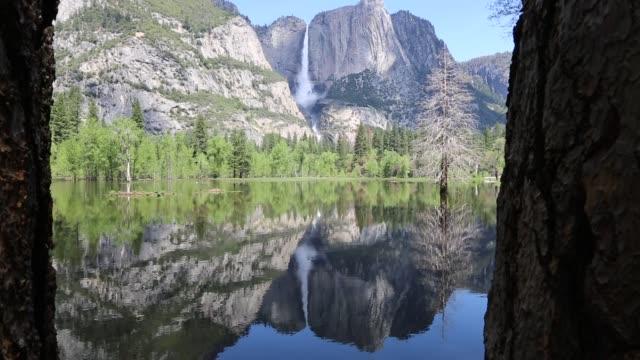 木の美しい風景 - カリフォルニアシエラネバダ点の映像素材/bロール