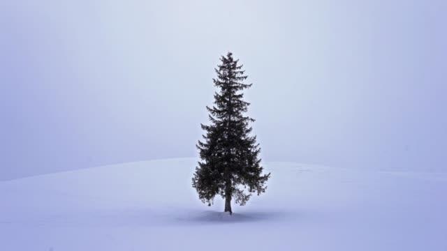 北海道の美しい風景クリスマスツリー - 冬点の映像素材/bロール