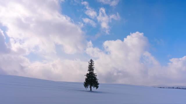 vackra landskap julgran i hokkaido japan - hokkaido bildbanksvideor och videomaterial från bakom kulisserna