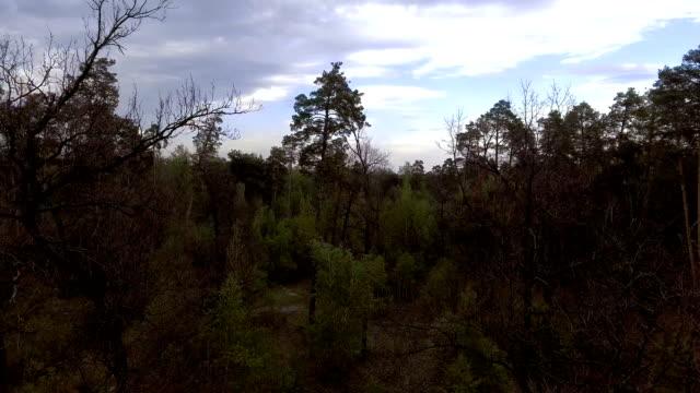 vackra landskap med en grön skog - städsegrön växt bildbanksvideor och videomaterial från bakom kulisserna