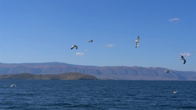 vídeos de stock e filmes b-roll de beautiful landscape of baikal lake with blue sky day time, irkutsk russia - irkutsk