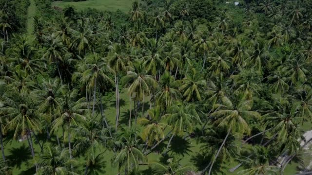 Beautiful landscape of coconut trees in tropical island