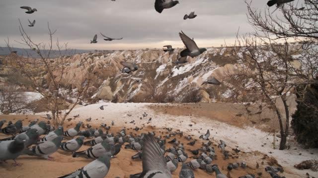 vackert landskap av duvor flyger i kappadokien duva dal, uchisar, turkiet - anatolien bildbanksvideor och videomaterial från bakom kulisserna