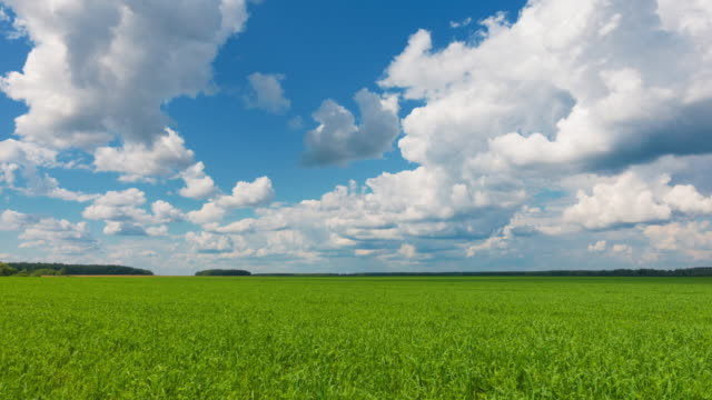 Beautiful landscape, sky and green fresh grass. Grass and sky at beautiful day.