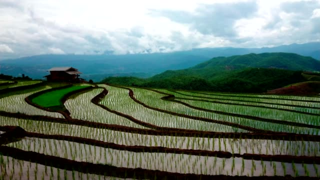 Beautiful landscape view of Rice Terraced paddy Field in Chiangmai, Thailand. pan right Beautiful landscape view of Rice Terraced paddy Field in Chiangmai, Thailand. pan right sa pa stock videos & royalty-free footage