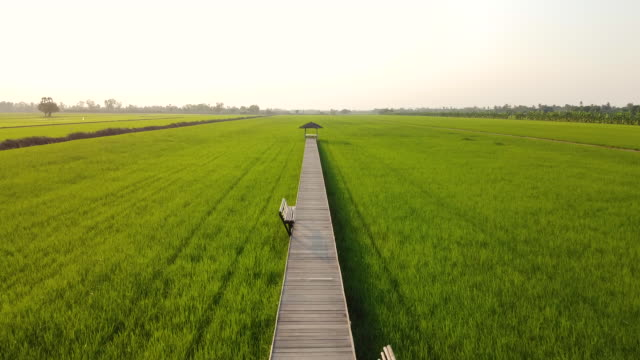 Beautiful landscape view of wooden bridge with wooden bench through rice field.