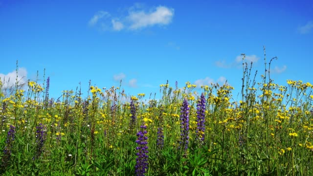Beautiful landscape with flowers and blue sky. video