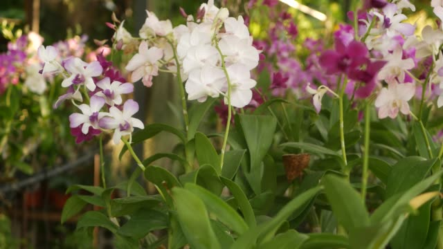 Beautiful lilac purple and magenta orchids growing on blurred background of green park. Close up macro tropical petals in spring garden among sunny rays. Exotic delicate floral blossom with copy space