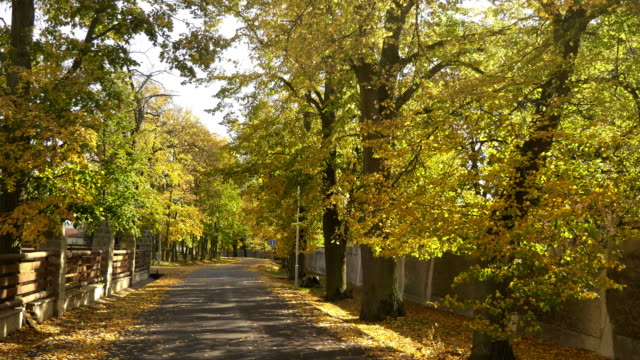 Beautiful linden alley with asphalt road. Autumn colorful leaves on trees in sunlight video