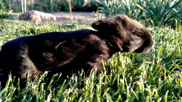 Beautiful little black rabbit running on the grass video