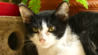 istock Beautiful little cat moving his eyes 544608144