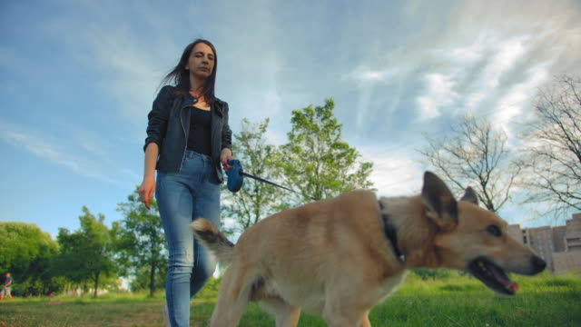 A beautiful long-haired young woman in jeans leads her red-haired dog for a walk