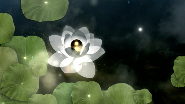 Beautiful Lotus Meditation Lotus or Waterlily in shiny scenery.  buddhism stock videos & royalty-free footage