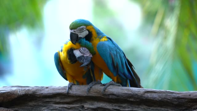 Video Beautiful macaw parrot