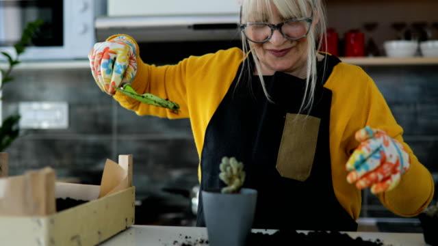 beautiful mature woman potting plants indoor - gardening video stock e b–roll