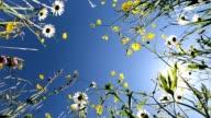 istock Beautiful meadow with wildflowers, bottom-up, bee-pasture, 4K 961308862