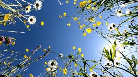 vídeos y material grabado en eventos de stock de hermoso prado con flores silvestres, de abajo hacia arriba, pasto de abejas, 4k - verano