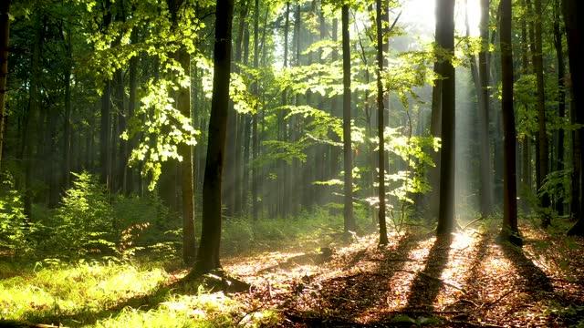 ormanda güzel sabah - havadan görüntüler - ultra yüksek çözünürlüklü televizon stok videoları ve detay görüntü çekimi