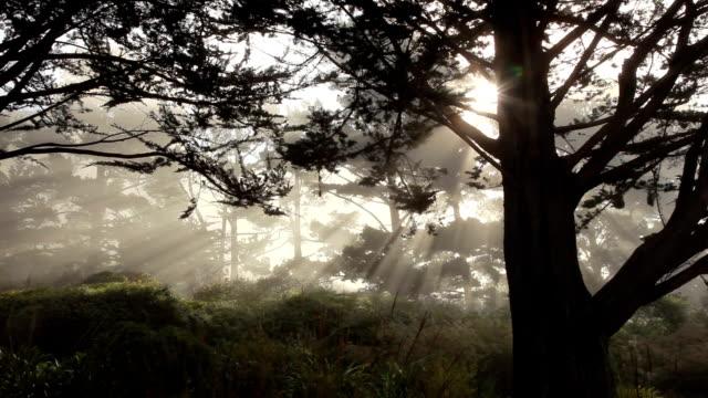 Beautiful Morning Light along the California Coast (with Audio) video