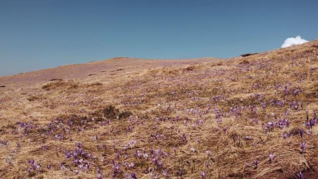 güzel dağ doğa - sırbistan stok videoları ve detay görüntü çekimi