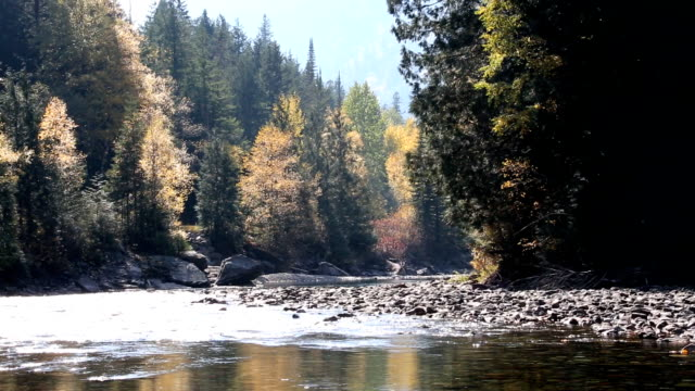 Beautiful Mountain River Forest video