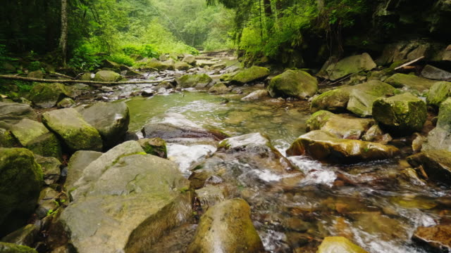 A beautiful mountain river or stream flows through the forest. The water boils on large stones. Ecology and clean environment video