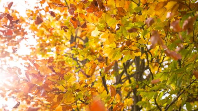 Beautiful multi colored autumn tree