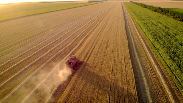 beautiful natural aerial landscape harvesting crops on field - orzo video stock e b–roll