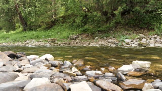 schöne natürliche landschaft des flusses und steine umgeben von grünen sommerwald. stock-footage. kalter bach fließt entlang der wachsenden bäume. - baumgruppe stock-videos und b-roll-filmmaterial