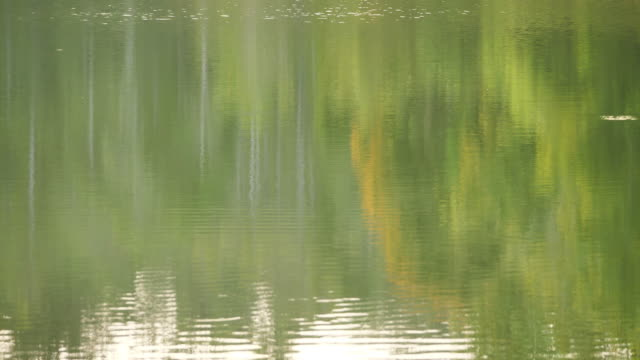 Beautiful nature background Reflection of the tree in the water at Green forest by the lake. Slow Motion