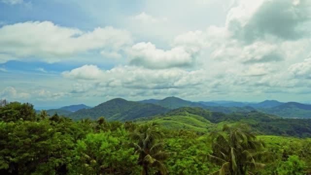 ジャングルの森の美しい自然。緑の植物や熱帯気候の明るい太陽の下で新鮮なヤシの木の紅葉 - インドネシア点の映像素材/bロール