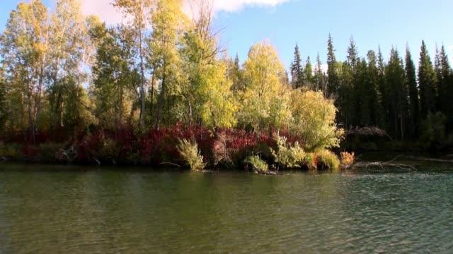 stockvideo's en b-roll-footage met prachtige natuur van de rivier de lena in de onbewoonde taiga van siberië rusland. - duurzaam toerisme