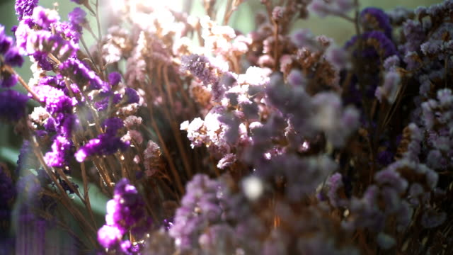 Beautiful nature scene field against sunlight with purple flowers video