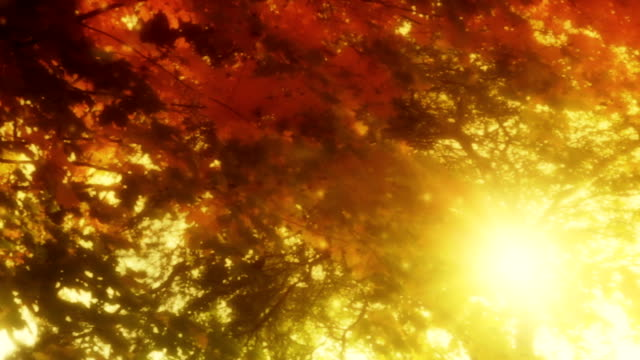 Beautiful nature with lens flare video