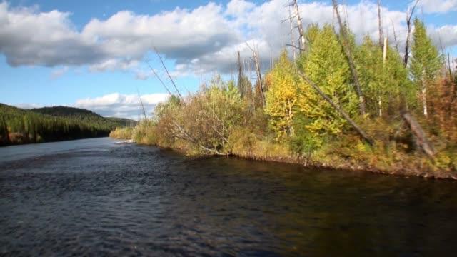 stockvideo's en b-roll-footage met prachtige natuur met gele bomen en wolken op de hemel van de lena rivier in siberië. - duurzaam toerisme