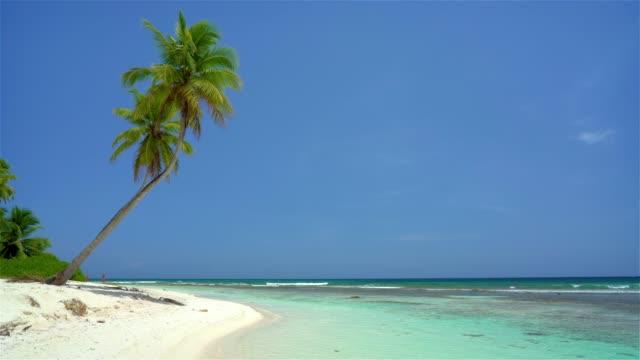 vídeos y material grabado en eventos de stock de hermosa playa del mar en república dominicana - palmera