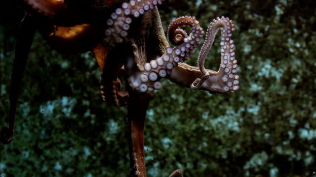 vidéos et rushes de magnifique pieuvre - bec