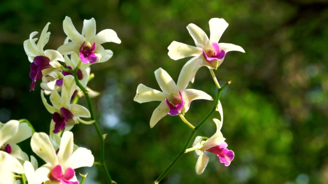 Beautiful Orchid flowers blooming