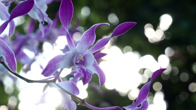 Beautiful orchid. Slow motion.