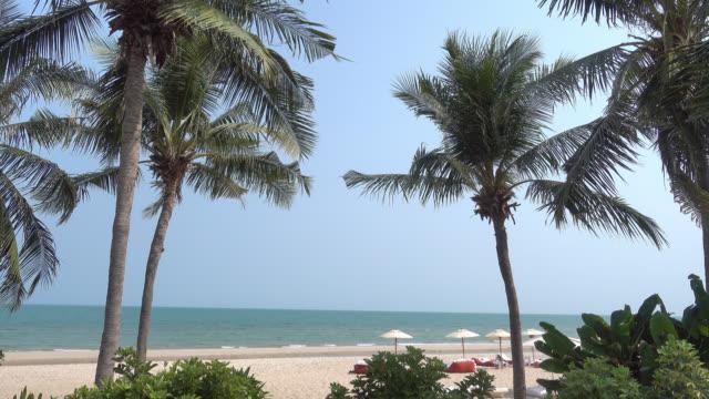 美しいヤシの熱帯のビーチと海 - ヤシの木点の映像素材/bロール