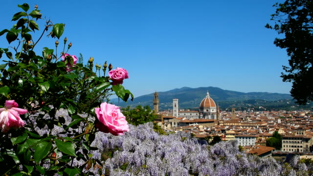 Beautiful pink roses in a garden in Florence with the Cathedral of Santa Maria del Fiore on background. Italy.