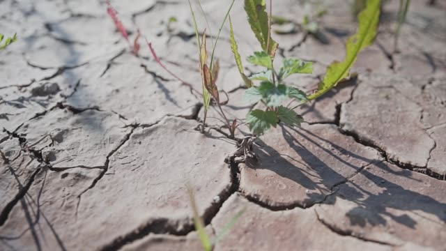 Beautiful plan of dry cracked earth. little blades of grass and rocks. Beautiful plan of dry cracked earth. little blades of grass and rocks. land stock videos & royalty-free footage