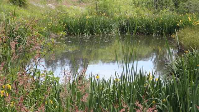 Beautiful Pond with Flowers on a Sunny Day video