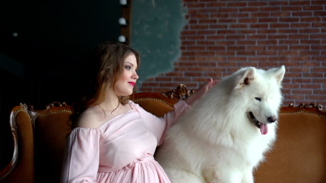 Beautiful pregnant girl is sitting in a sofa and pet her big white dog video