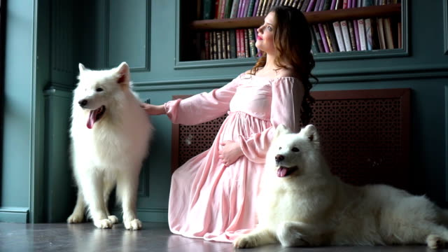 Beautiful pregnant woman in a pink dress is sitting on the floor with her two big white dogs video