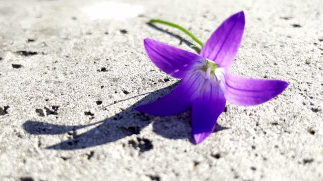beautiful purple flower on concrete