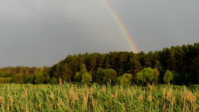 美しい虹の森。 - レインボー点の映像素材/bロール